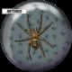 Retired Spider Viz-A-Ball back side, for Spider (thumbnail 2)